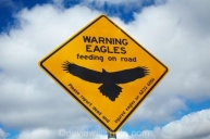 Eagle Warning Sign, Bass Highway near Smithton, Northern Tasmania, Australia